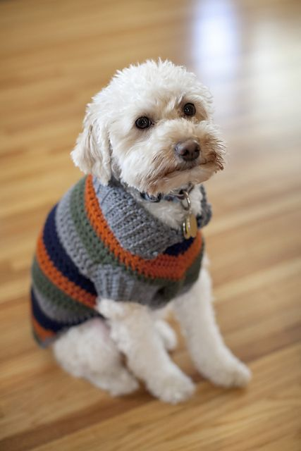 Dog Sweater crochet 3
